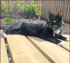 Family offer reward for information leading to lost cat Bob being found