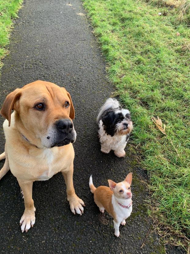 Ayr Advertiser: 262 Riley, Maisy and Dottie (front)