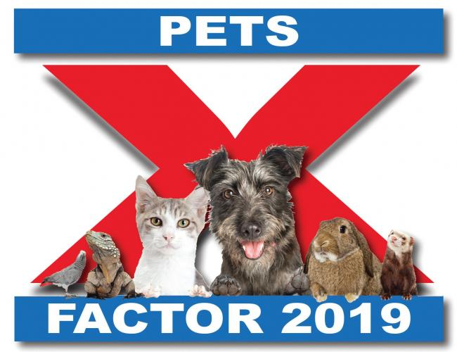 Our Pets Factor entries for 2019 - but who will win £1,000 prize?
