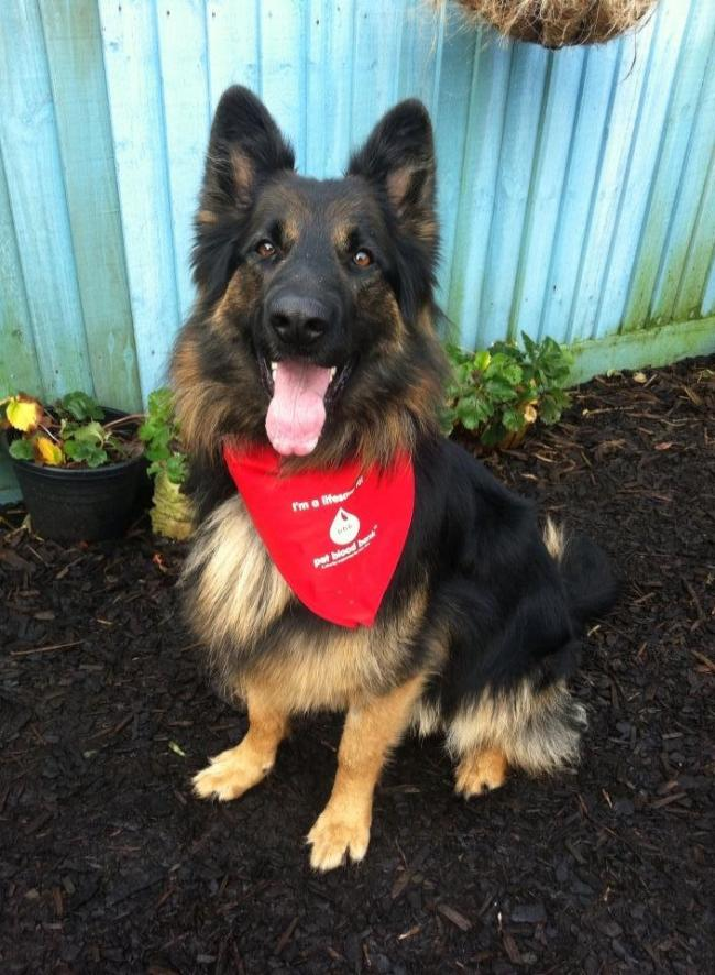 Plea for Ayrshire dogs to get involved in blood donation drive
