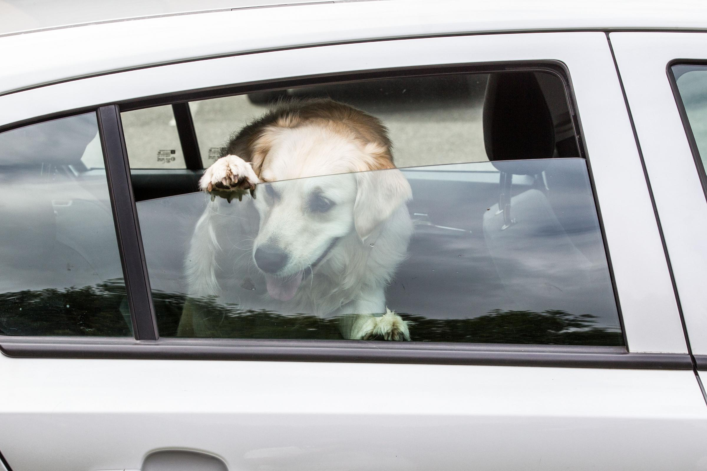 Warnings after police are called to dog in distress inside hot car