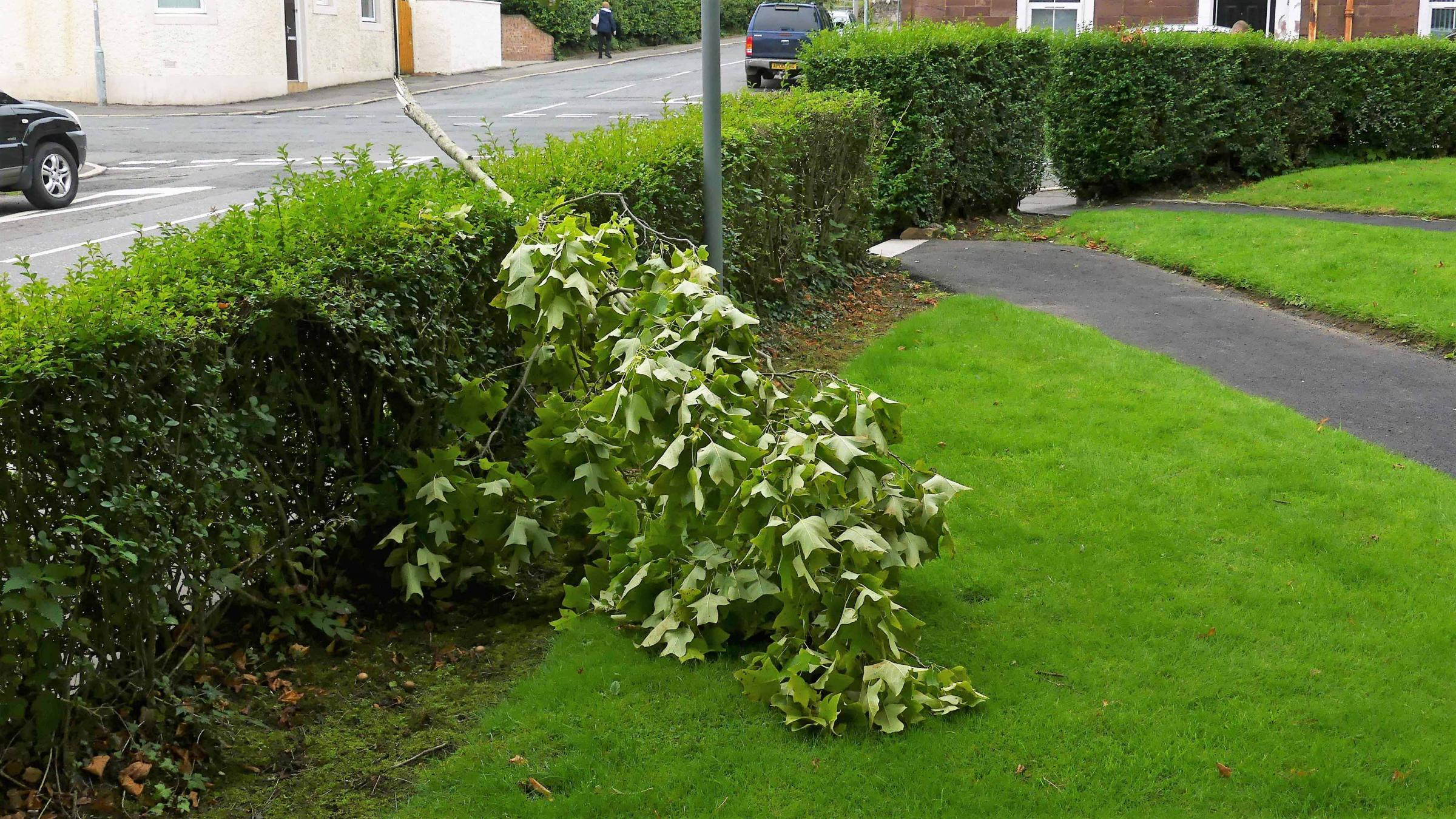 Greenside improvement plans thwarted by tree vandals