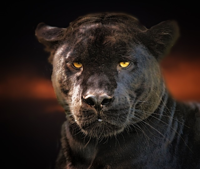 Black PANTHER on the loose in Ayrshire prompts police safety warning
